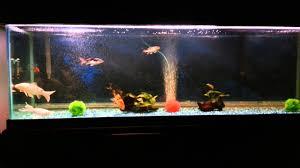 Fish Tank Koi Fish Tank Youtube