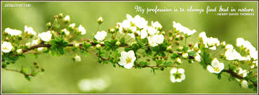 Spring Christian Quotes Best Of Spring Flowers Facebook Covers Spring Flowers FB Covers Spring