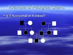 Pedigree Charts Powerpoint