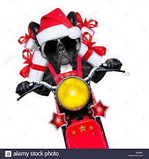 dog on motorbike bringing presents or gifts to everyone
