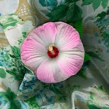 Pink Mallow Photograph by Wendy Erickson