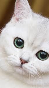 cat wallpaper iphone 5. Contemporary Cat In Cat Wallpaper Iphone 5 A
