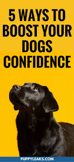Best 25+ Dog flea bath ideas on Pinterest   Flea bath for dogs ...
