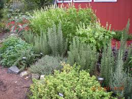 Small Picture planning an herb garden Nelsons Herbs Blog