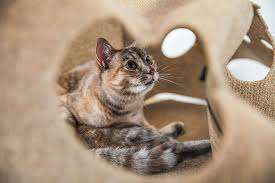 the 8 best interactive cat toys to in 2018