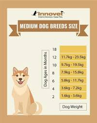 Shiba Inu Growth Chart Puppy Growth Chart By Month Breed Size With Faq All You