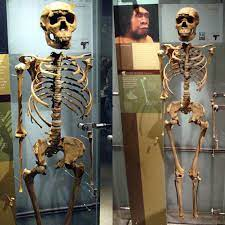 Meet Turkana Human who lived 1.6 ...