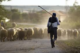 Image result for shepherd and sheep