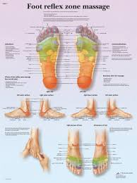 Top Of Foot Reflex Chart Anatomical Chart Foot Massage Reflex Zone Paper