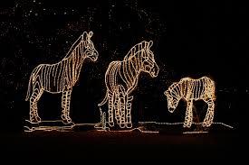 Denver Zoo Holiday Lights Denver Zoo Light Show Christmas Lights Rail Light Scenic