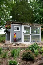 Best Backyard Chickens Facts About Chickens Best Chickens For How To Keep Backyard Chickens
