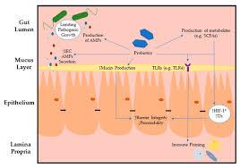 intestinal epithelial cells