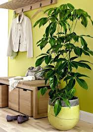best office plant no sunlight. office plants no sunlight desk 19 best houseplants you can grow without plant