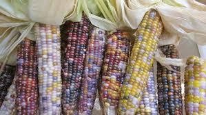 ht seeds trust glass gem corn ll 120515 wblog glass gem