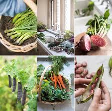 Kitchen Garden Blog Kitchen Garden Notes Amelia Freer