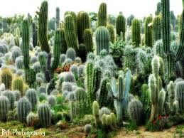 Small Picture 309 best images about Desert Delights on Pinterest