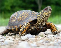 Image result for turtles