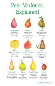 Pear Identification Chart Pear Varieties Explained Starkrimson Bartlett Anjou