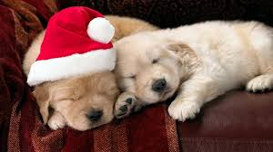 cute animal christmas backgrounds. Simple Animal Cute Christmas Puppies Throughout Animal Backgrounds T