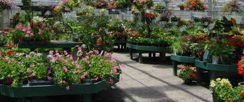 Small Picture Winterberry Gardens CT Garden Center Landscape Lawn Service