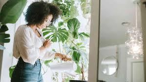 Pflanzen Als Luftreiniger 10 Zimmerpflanzen Die Schadstoffe