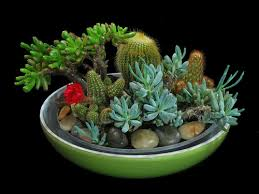 Small Picture Garden Design Garden Design with Indoor Cactus Garden on