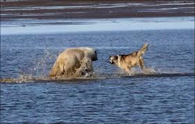 boatswain dog. boatswain dog