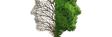 39567172 human emotion and mood disorder as a tree shaped as two human faces with