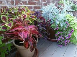 Small Picture Container Gardening Ideas For Full Sun Home design and Decorating
