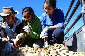 purva s college essay conservation in action national hanson n aan ku su00ca 48