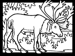 Small Picture Caribou 01 Coloring Page Coloring Page Central
