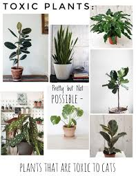 full size of interior design house plants safe for cats amazing a guide to the