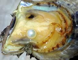 huître perlière