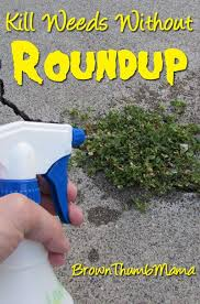 how to kill weeds in garden. there is a #natural way to kill #weeds without using roundup--even how weeds in garden