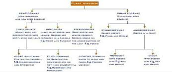 Flow Chart Of Classification Of Animal And Plant Kingdom