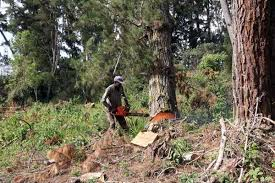 State Extends Forest Logging Ban By A Year Daily Nation