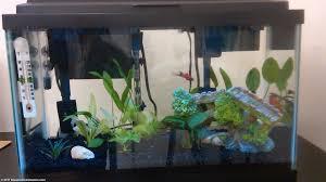 fish tank lighting ideas. 10 Gallon Aquarium Starter Tank With Extra Filter. Filter Fish Lighting Ideas