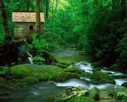 Images Of Nature Scenes Widescreen HD ...