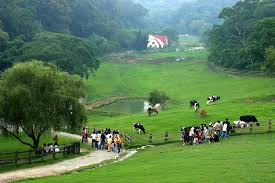 <b>Flying Cow</b> Ranch, Tongxiao – Updated 2020 Prices