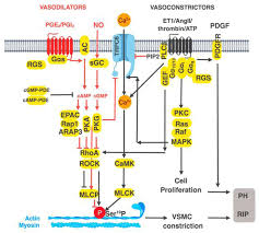 Gpcr Signaling A Current View Of G Protein Coupled Receptor Mediated