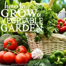 Kitchen Gardening For Beginners How To Grow A Vegetable Garden Gardening Tips For Brown Thumbs