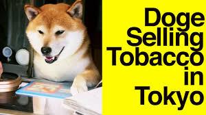doge shiba. Wonderful Shiba On Doge Shiba T