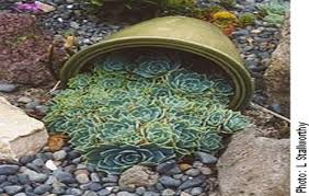 Small Picture find this pin and more on succulent garden designs by luvlita
