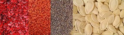 Resultado de imagen para semillas