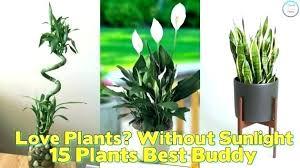 low maintenance office plants. Low Maintenance Office Plants Light High .