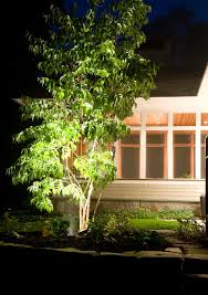 home lighting techniques. Delighful Techniques Uplighting Is A Great Landscape Lighting Technique For Trees Around Your  Home Pin This In Home Lighting Techniques O