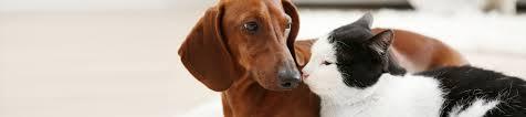 veterinary services animal clinic in garden city
