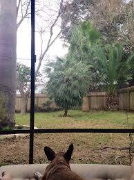 lone star patio patio coverings 11712 n lamar blvd gracy woods austin tx phone number yelp