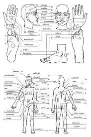 Marma Points Chart Nadi Marma Points Google Search Ayurvedic Therapy