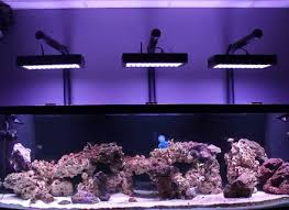diy led reef lighting kits lighting ideas diy fish tank light hanger onvacations wallpaper